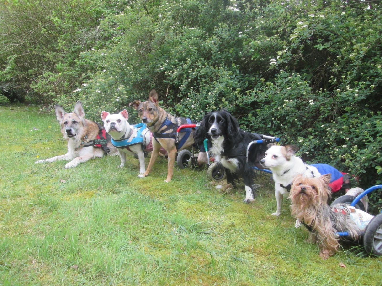 Hunde im Rollstuhl, Gruppenbild